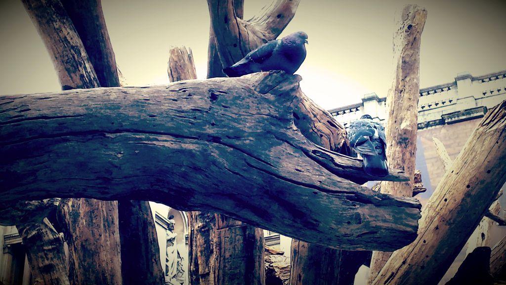 goloba na ai weiweijevem drevesu